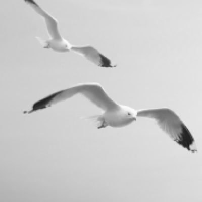 THE SHAPE - DICK TYLER BIRDS